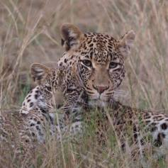 Shibuye & Cub