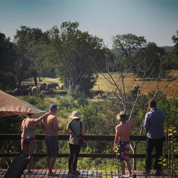 The crew by the pool when we saw the elephants