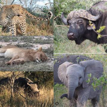 The Big 5 - spotted by us!